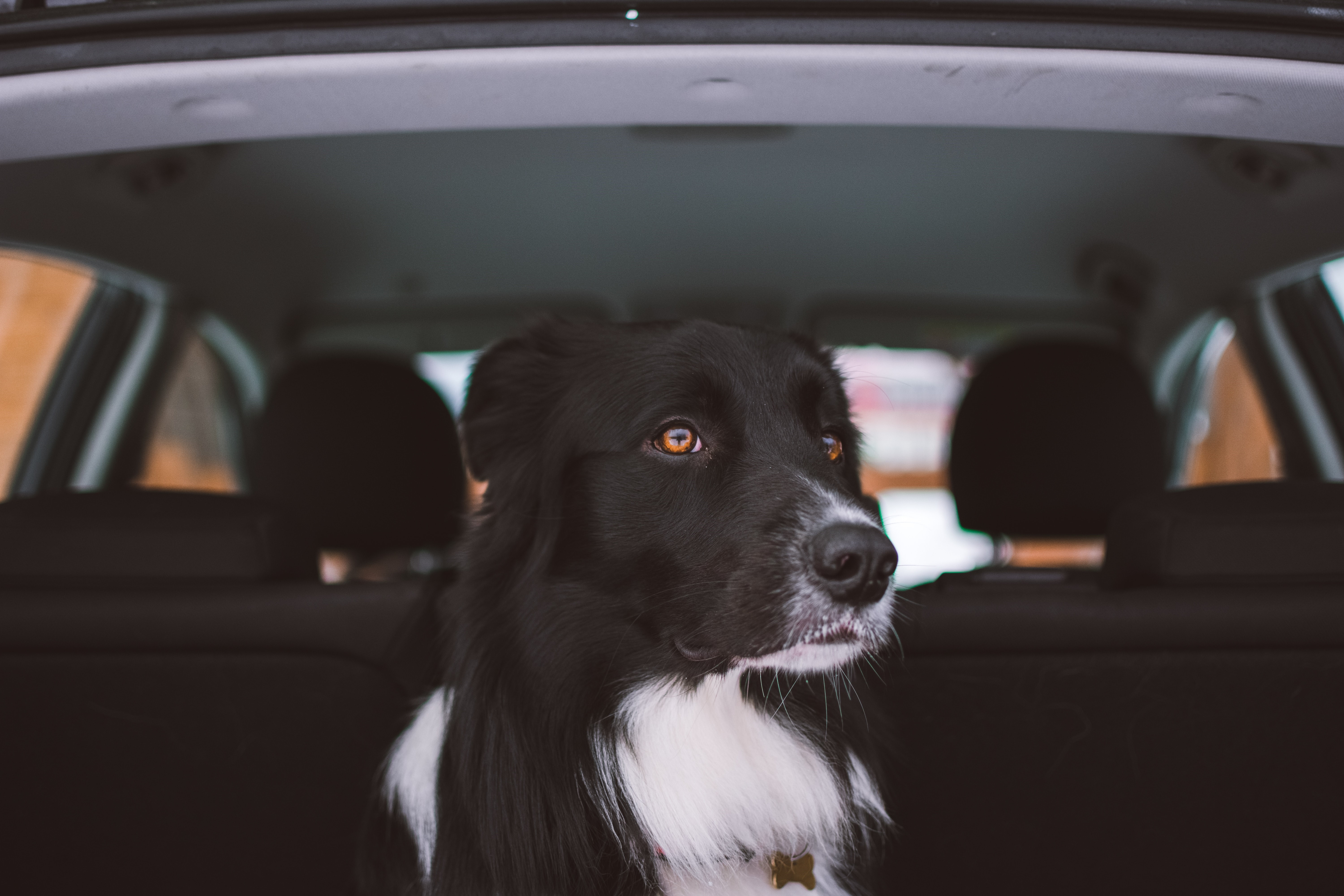 How to Protect Your Car's Interior from Pets