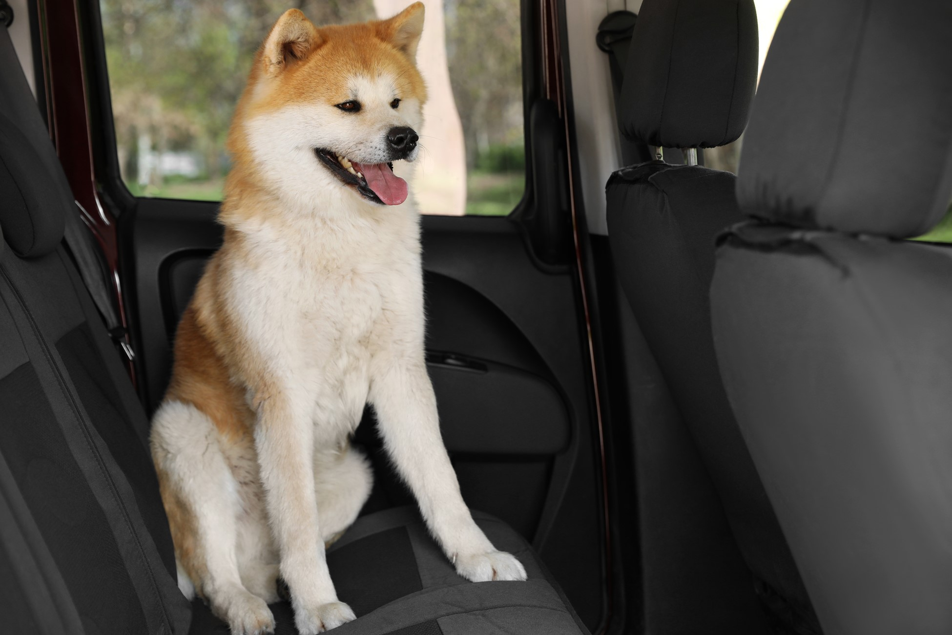 How to Remove Pet Odors and Smells in the Car